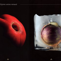magazine-trois-etoiles-pauline-daniel-photographie-tomate-rutabaga
