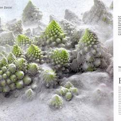magazine-gault-et-millau-daniel-photographie-04