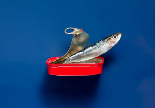 Création culinaire, sardine sortant de sa boite, Photographie culinaire Pauline Daniel pour Bouches du Rhone tourisme, stylisme culinaire Pauline Daniel