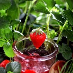 confiture-fraise-jardin-a-l-assiette-nature-FIPC-2010-02