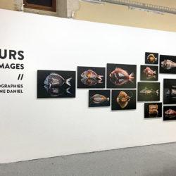 eteindiens-arles-exposition-paulibne-daniel-photographie-007