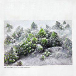 Photographie-del-annee-nature-morte-2013