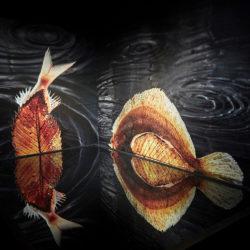 poisson-photographie-mer-Pauline-Daniel-026