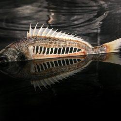 poisson-photographie-mer-Pauline-Daniel-033