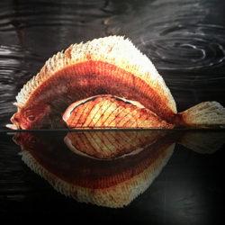 poisson-photographie-mer-Pauline-Daniel-034